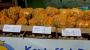 Kartoffelmarkt-010-023