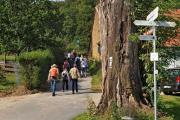Am großen Baumstumpf vorbei, den Hermannsweg hoch zur Burg